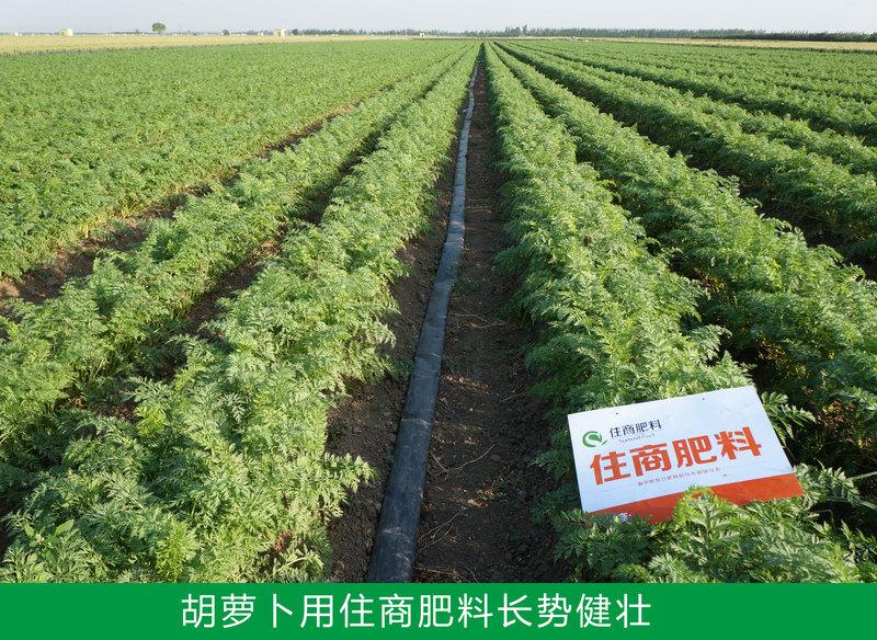 胡萝卜用住商肥料长势健壮.jpg